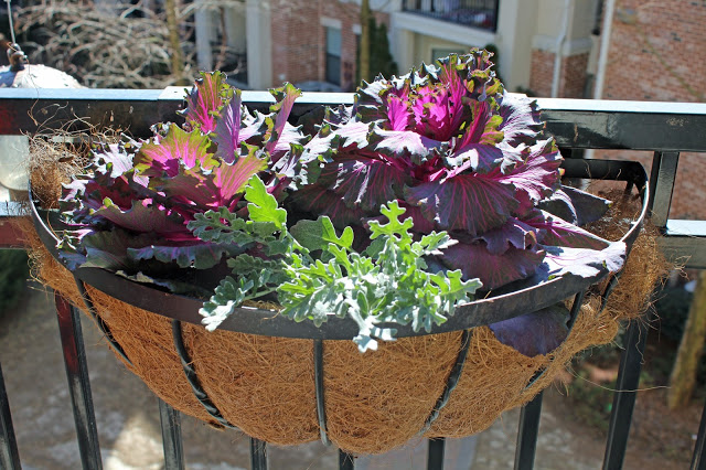 patio gardening with kale and cabbage