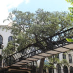 top 10 things you must do in savannah